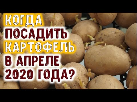 Вопрос: Когда в 2020 году сеять салат Какие благоприятные дни?