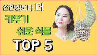 [랭킹맘]선인장보다 더 키우기 쉬운 식물 TOP5