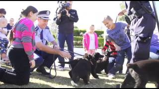 Nsw Police Dog Puppies Named