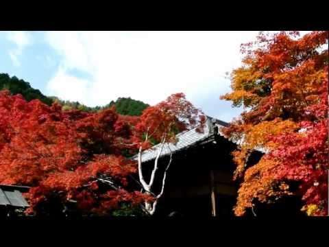 京都 秋の常寂光寺 Historic Monuments of Ancient Kyoto