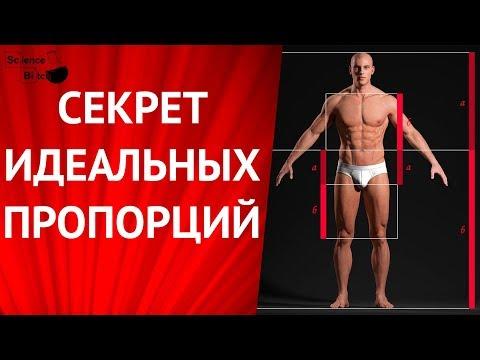 Идеальное мужское тело. Божественные пропорции