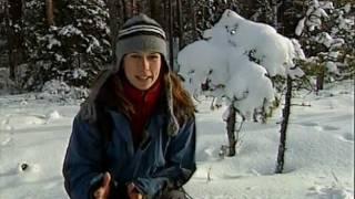 Mitt i naturen_I vargens spår 2004-03-24