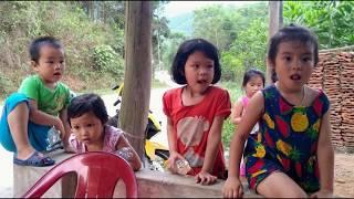 Hoa Trinh Nữ - Nhạc Không Lời - Ảnh rừng Hoành Bồ