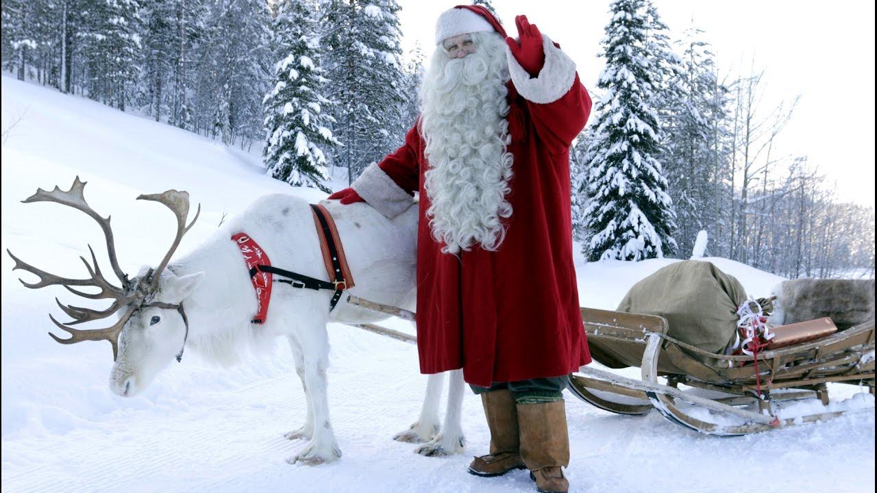 Los Renos De Papá Noel Santa Claus En Laponia: Las