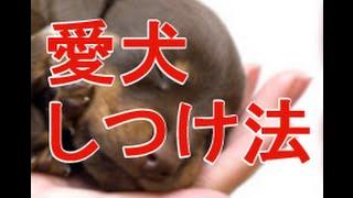 森田誠の愛犬と豊かに暮らすためのしつけ法」 DVD 2枚セット URL;ht...