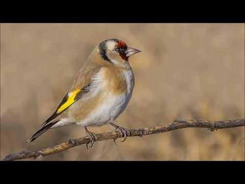 Türkiye'nin Kuşları 3 - Birds Of Turkey 3