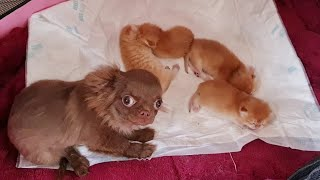 Caramel's kittens are under reliable protection 🤣 ENG/SUB Whiskered babysitter - Arnie