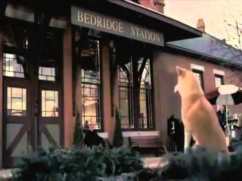 هاتشيكو .. الكلب الوفى الذى انتظر صاحبة 9 اعوام كاملة فى محطة القطار !!!