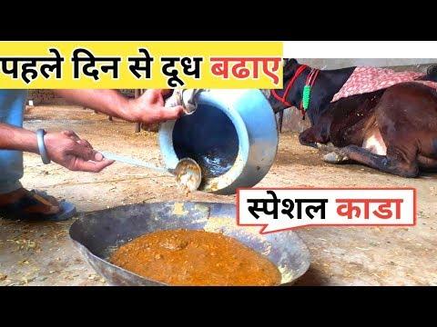 डिलीवरी के बाद दूध कैसे बढाए पहले दिन से पशु पालन में काडा कैसे बनाए Pashu palan after delivery tips