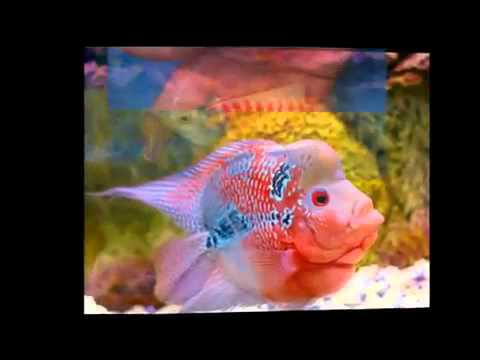 Freshwater tropical fish wholesale supplier for fish and for Exotic fish and pets