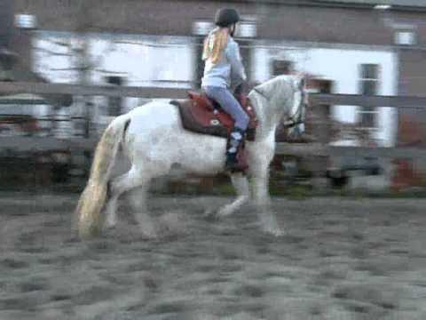Beste paard van de youtube - De thuisbasis van de wereld chesterfield ...