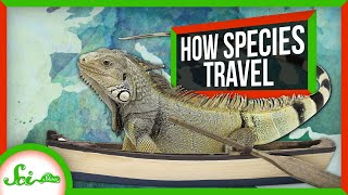 How Did You Get Here?! (Unexpected Ways Species Travel the World)