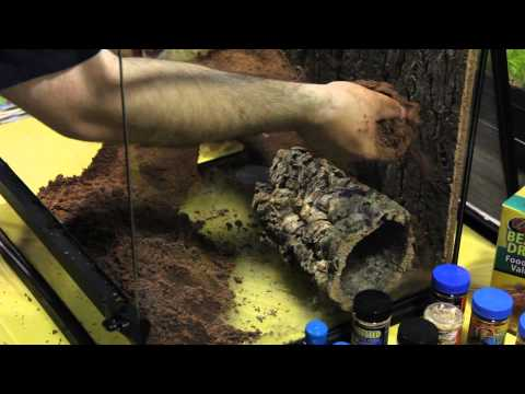 How to Create Amazing Terrariums using Zoo Med Excavator Clay Burrowing Substrate | Big Al's
