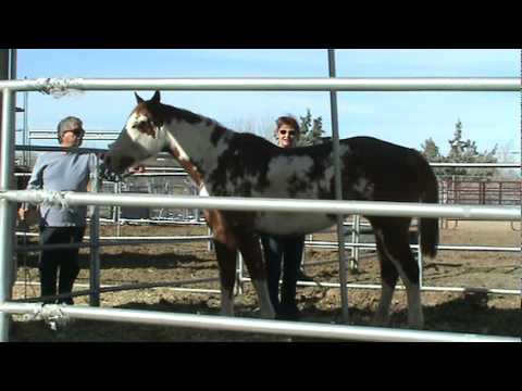 Candy - Sorrel Overo horse for sale, Antelope Valley