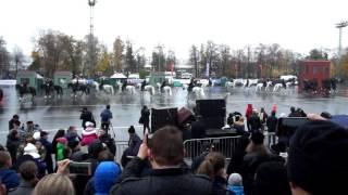 конная полиция лужники