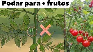 Como, Quando e Porquê Devemos Podar os Tomateiros