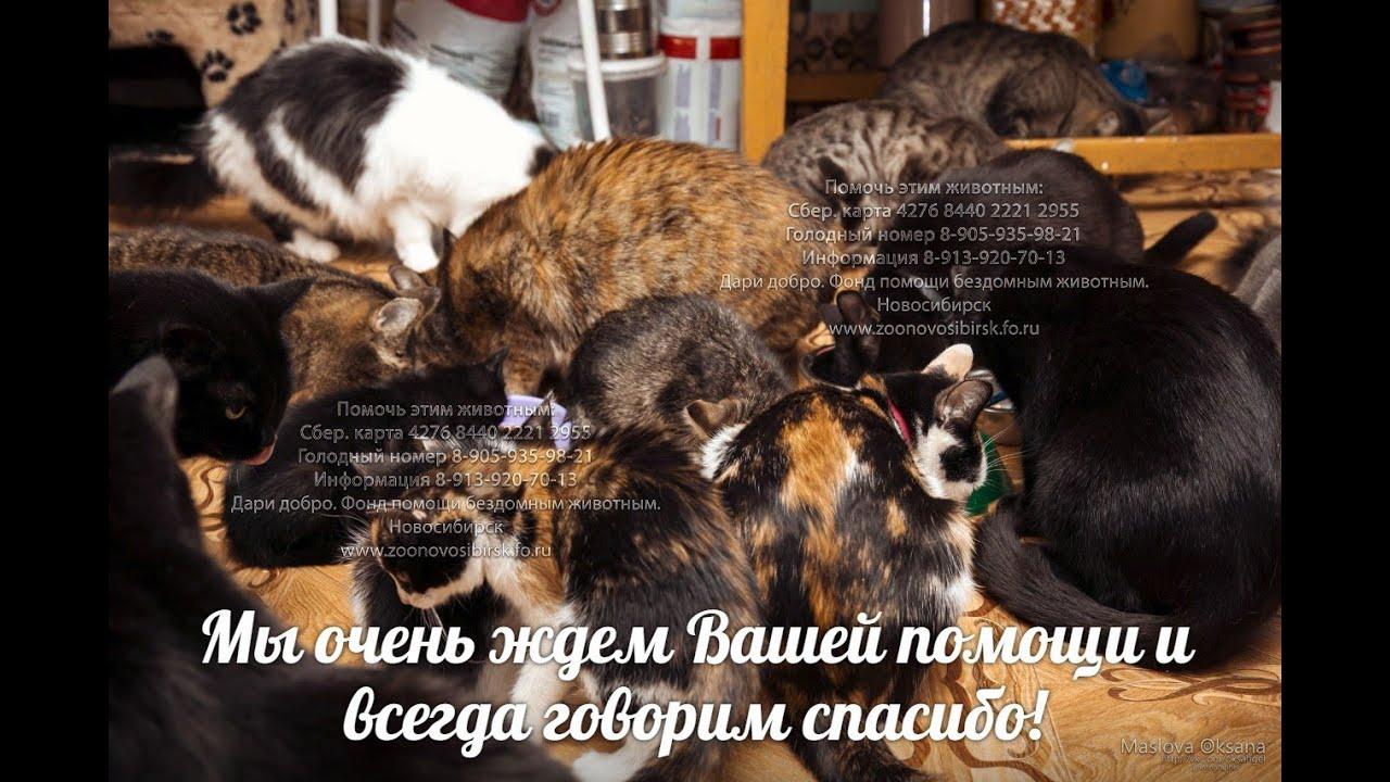 Приют для кошек новосибирске