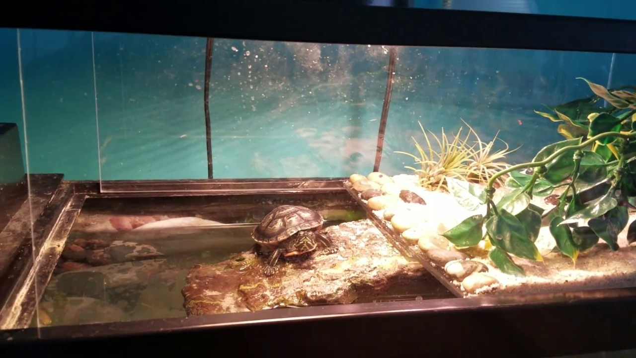 The Best Turtle Topper Basking Dock Youtube