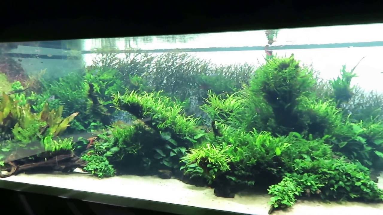 Aqua scape Takashi Amano - YouTube