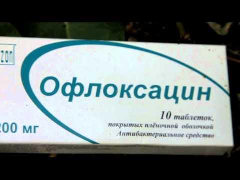 бактериальный ожог груши фото лечение