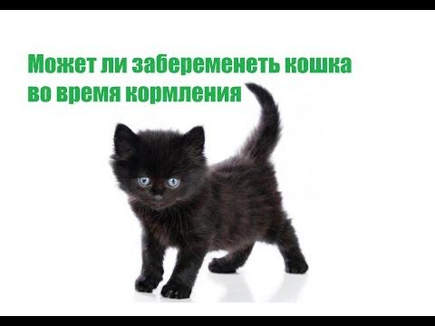 Может Ли Забеременеть Кошка При Кормлении&Может Ли Кошка Забеременеть После Родов.Ветклиника Био-Вет