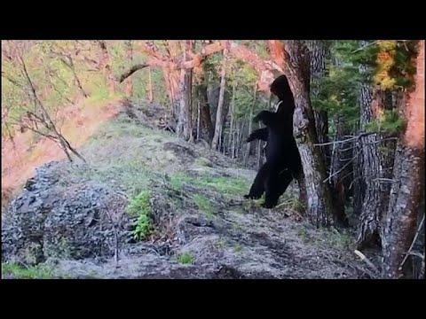 شاهد: ماذا فعل دب أسود آسيوي لحك ظهره في أحد متنزهات روسيا …  - نشر قبل 4 ساعة
