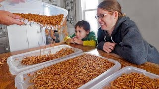 I surprised my wife with 5,000 mealworms…