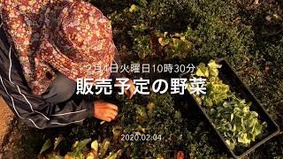 2月4日 販売予定の野菜です 昔ながらの野菜を無農薬で育てています 阪急六甲の鍼灸院前で直売しています(火曜日と金曜日お昼頃) 当菜園の野...