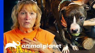 Rescued Pup's Unbroken Spirit Gives Tia Goosebumps | Pit Bulls & Parolees