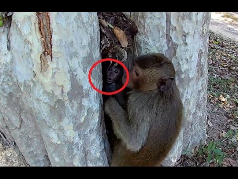 Thumbnail: Real life of baby monkey playing