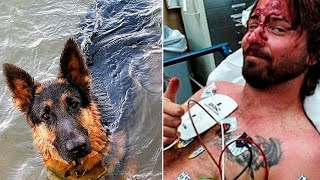 Dog Saves Man's Life By Swimming For 11 Hours In The Ocean...