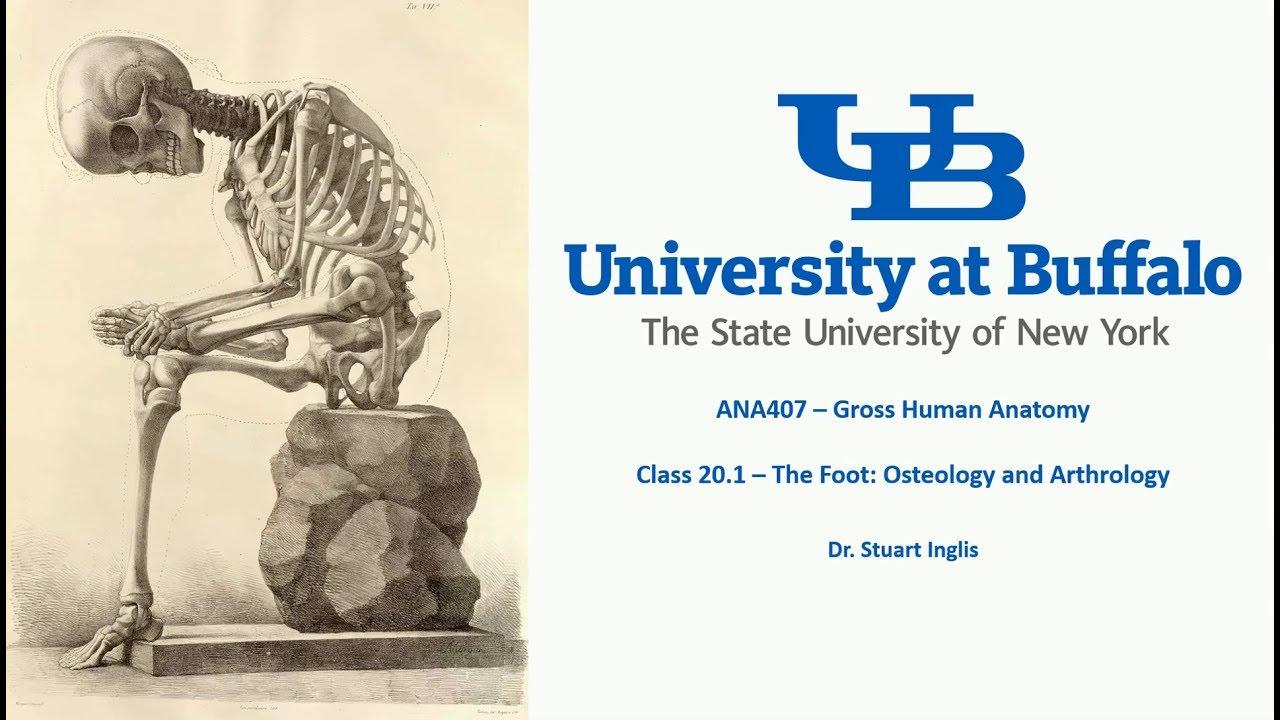 ANA407 - Class 20.1 - The Foot: Osteology and Arthrology - YouTube