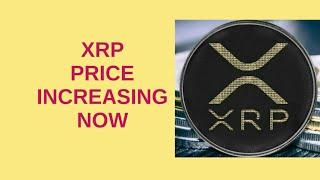 Xrp price increasing now