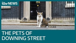 Does Larry the cat's legacy end with Boris Johnson? | ITV News