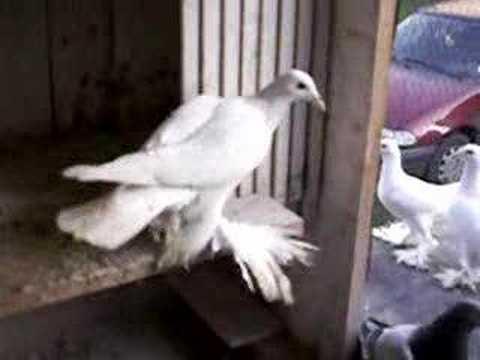 Topnotch Ptaki - YouTube KD16