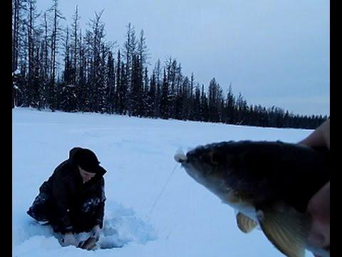 весенняя рыбалка на карася в хмао