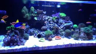 My Rimless 120G Reef Tank - July 7 of 2013