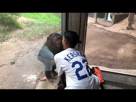 Anthony interacting with baby chimp.