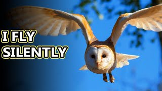 Owl facts: the head turning birds | Animal Fact Files