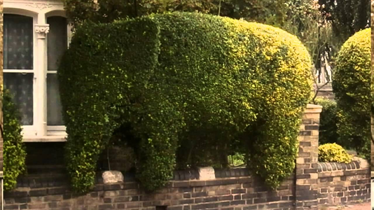 Elephants in London, Elephant Topiary in a quiet North London ...
