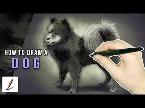 How To Draw A Dog with Corel Painter - Draw This #9