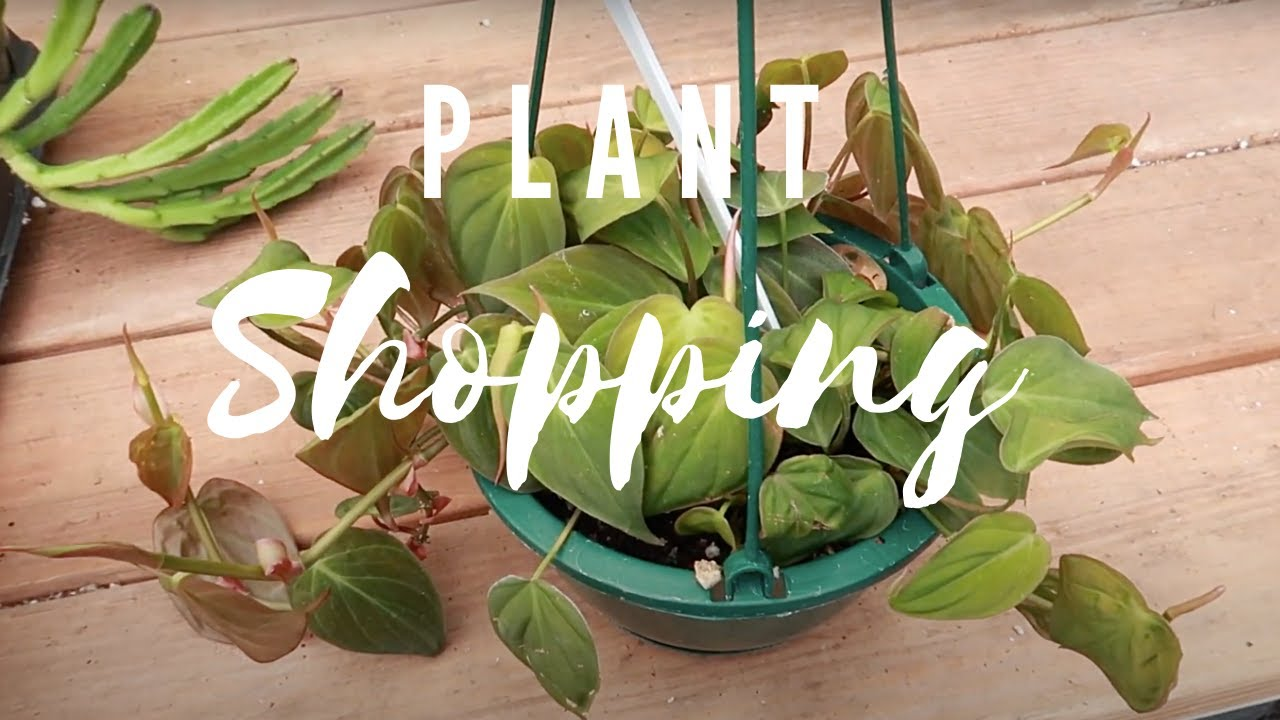 Plant Shopping at Southwest Gardens | JUNE 2020