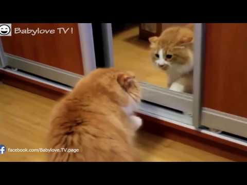 Funny Cat Kittens Compilation 2016   Funny Cat Videos!!