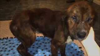 Rudy - Beaten and abused dog saved from death needs your help!