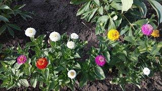 Обзор садовых цветов в июле и садовых скульптур