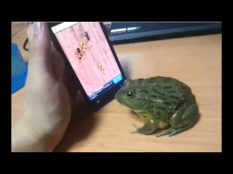 Frog Tries To Eat Ants On Cell Phone