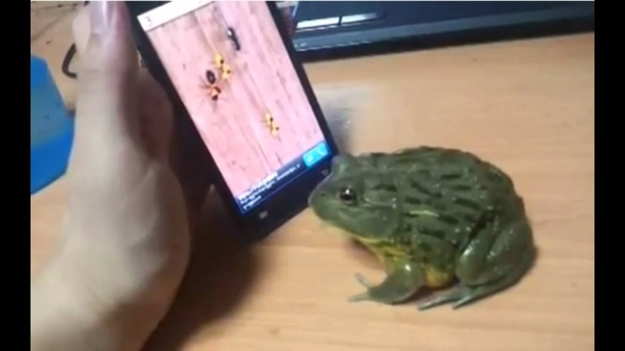 frog tries to eat ants on cell phone youtube. Black Bedroom Furniture Sets. Home Design Ideas