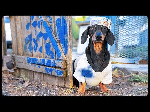 Grandpa's little helper! Cute & funny dachshund dog video!