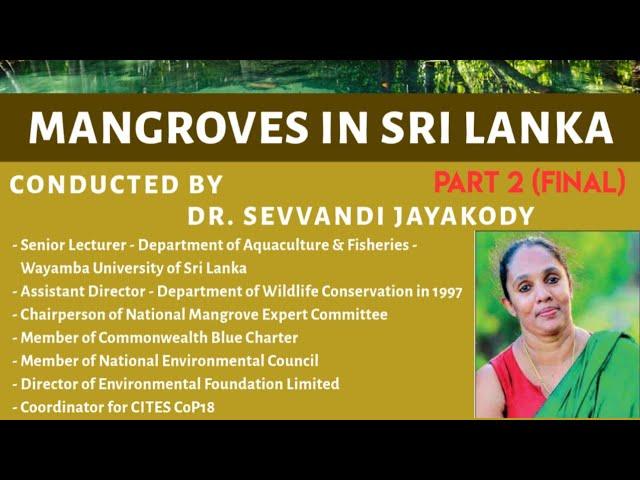 Mangroves in Sri Lanka (14th November 2020) - Part 2/2