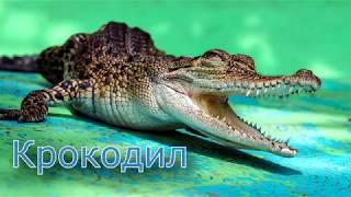 Учим диких животных 1-я часть.  Познавательное  видео для малышей на русском и английском.